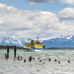 妖娆 Travels- 智利 Tours Fishing boat and old Dock, Puerto Natales, Antartica 墨西哥 holiday