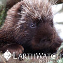 Study Abroad Reviews for Earthwatch: Canada - Mammals of Nova Scotia