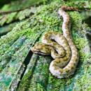 USAC: Heredia - Spanish Language, Ecological and Latin American Studies Photo