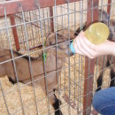 Global Learning Semesters: Nicosia - Summer in Cyprus: Animal Science Photo
