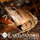 Study Abroad Reviews for Earthwatch: Australia - Australia's Vanishing Frogs