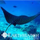 Study Abroad Reviews for Earthwatch: Seychelles - Coral Communities in the Seychelles