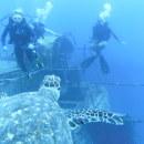 Sea|mester: S/Y Ocean Star - Caribbean Basin Voyages Photo