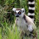 Study Abroad Reviews for SIT Study Abroad: Madagascar - Biodiversity and Natural Resource Management