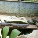 Study Abroad Reviews for Volunteer Costa Rica Escazu: Animal Rescue Center