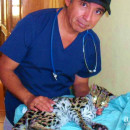 Study Abroad Reviews for Volunteer Guatemala Xela: Animal Rescue Program