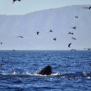 Study Abroad Reviews for Wildlands Studies: TheCalifornia Channel Islands Project: Wildlife Recovery And Reintroduction
