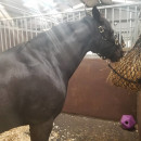 Adelante: Edinburgh - Equine Summer Program in Scotland Photo