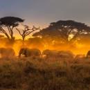 Study Abroad Reviews for ELI: Kenya - Volunteer Programs in Kenya