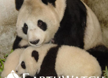 Study Abroad Reviews for Earthwatch: China - On the Trail of Giant Pandas
