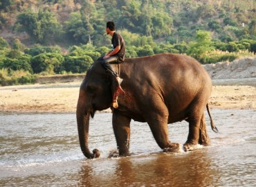 Study Abroad Reviews for World Endeavors: Volunteer in Thailand