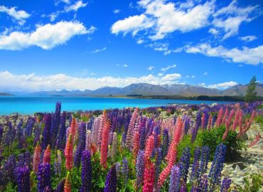 Study Abroad Reviews for Center for Study Abroad (CSA): New Zealand - New Zealand Study Abroad