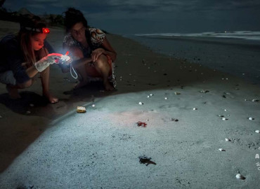 Study Abroad Reviews for Volunteer Costa Rica Pacific: Sea Turtle Conservation