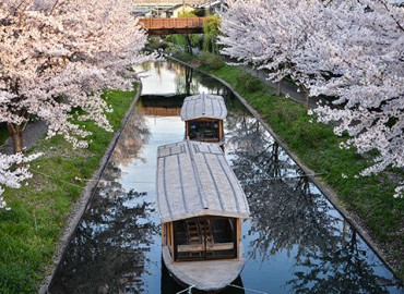 Study Abroad Reviews for CIEE: Kyoto - Summer Ancient + Modern Japan