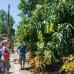 Photo of World Endeavors: Volunteer in the Philippines