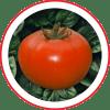 Tomate Híbrido Compack