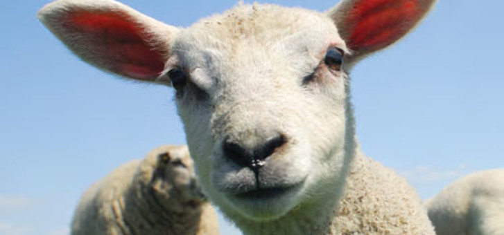 God's Lamb, Our High Priest