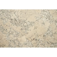 GRNWHTREESLAB2P - White Reef Slab - White Reef