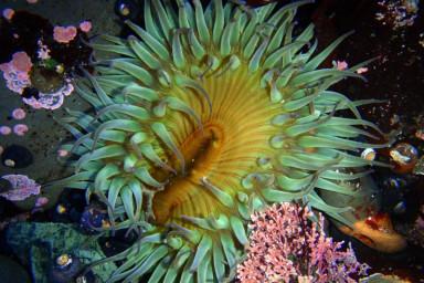 Fitzgerald Marine Reserve, California