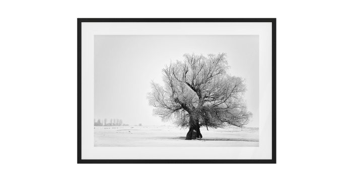 The Frost Print