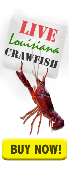buy crawfish now