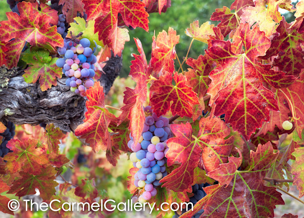 Autumnchanges_fsrszu