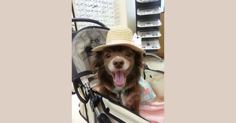 Photo of Beary, a Pomchi (13.7% unresolved)