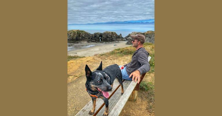 Photo of Rush, an Australian Cattle Dog  in Warwick, Rhode Island, USA