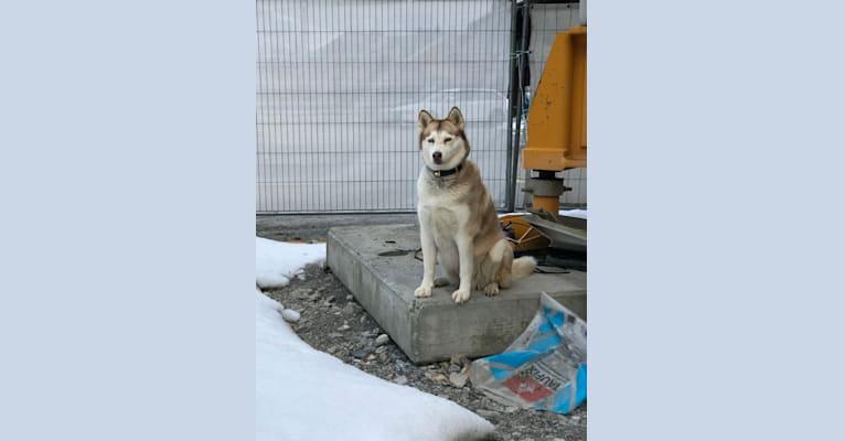Photo of Milady, a Siberian Husky mix