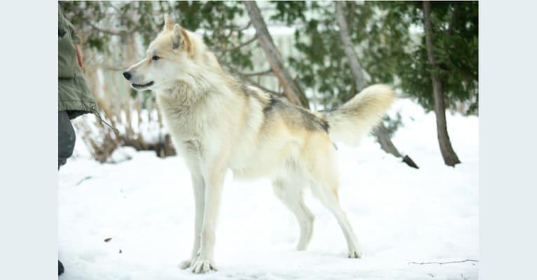 Photo of Utu, a   in Finland