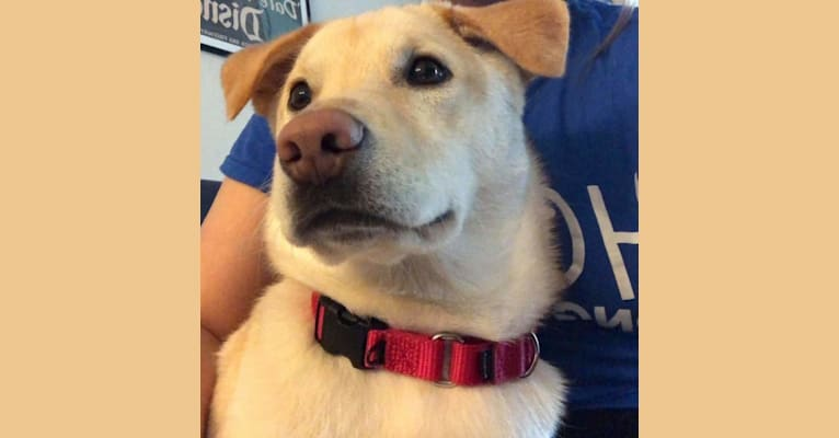 Photo of Josh, a Japanese and Korean Village Dog  in Arlington, Virginia, USA