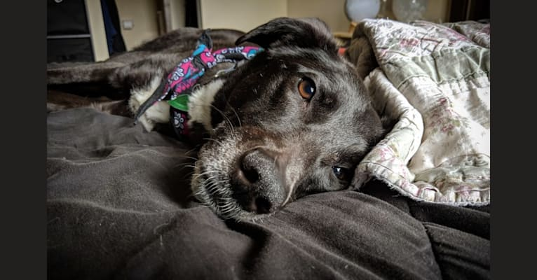 Photo of Amar, a Middle Eastern Village Dog  in Madison, Wisconsin, USA