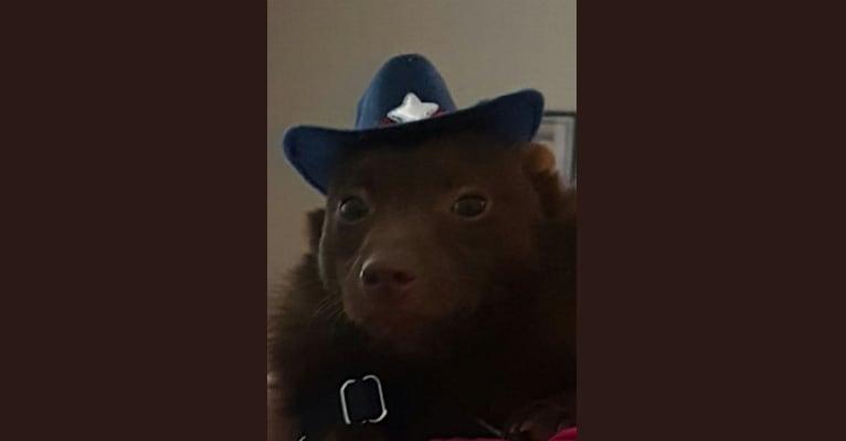 Photo of Buster Bear, a Schipperke  in Spokane, WA, USA