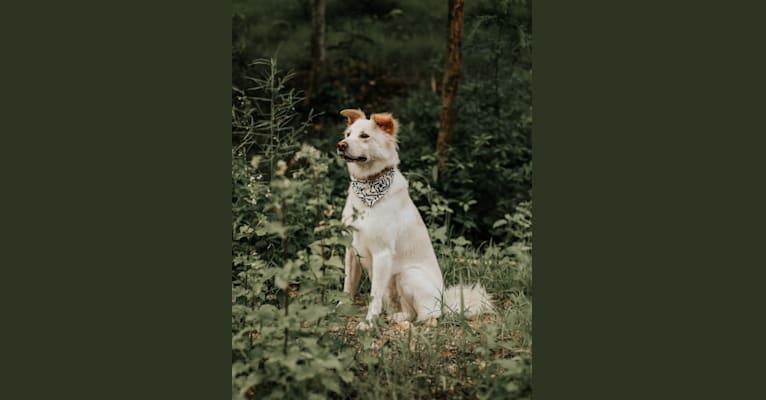Photo of BeiBei, a Hong Kong Village Dog