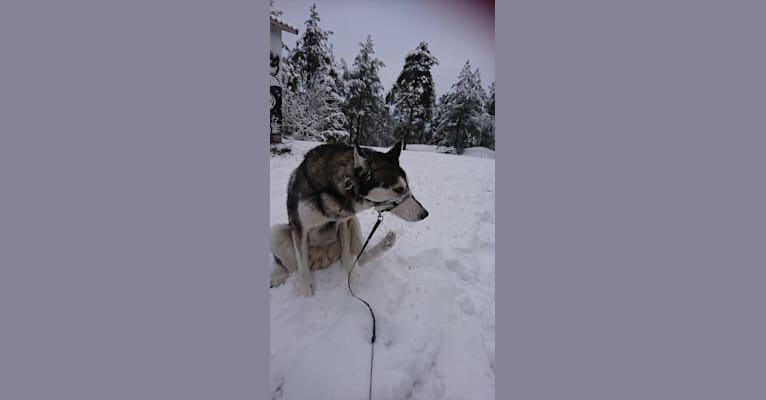 Photo of Sisu, a   in Karjalohja, Suomi