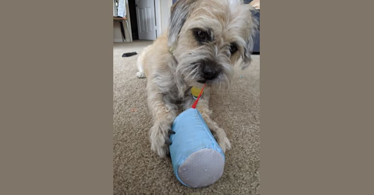 Photo of Frasier, an American Pit Bull Terrier, Shih Tzu, Pekingese, and Mixed mix in Orlando, Florida, USA