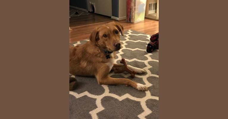 Photo of Jack, a Border Collie, Beagle, Pug, Mountain Cur, and Mixed mix in Maryland, USA