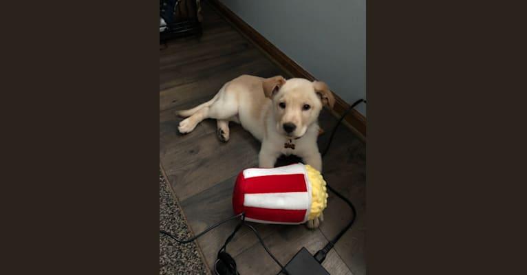 Photo of Murphy, a German Shepherd Dog and Australian Shepherd mix in Clinton Twp, Michigan, USA