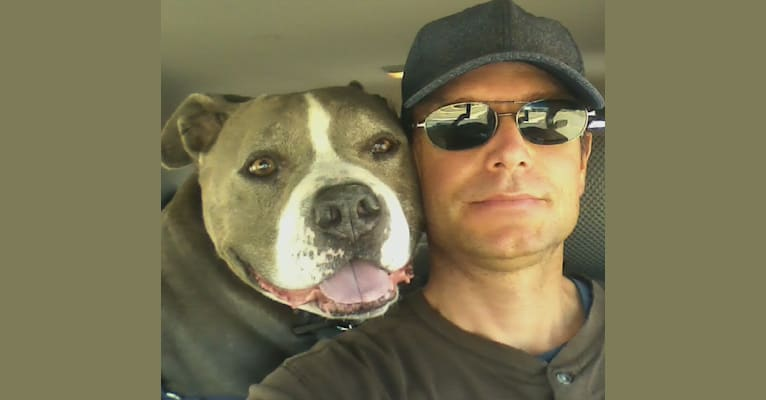 Photo of Bubba, an American Bully