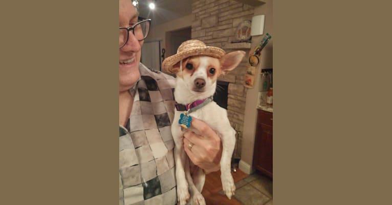 Photo of Joey, a Chihuahua, Pomeranian, and Miniature Pinscher mix in Merced, California, USA