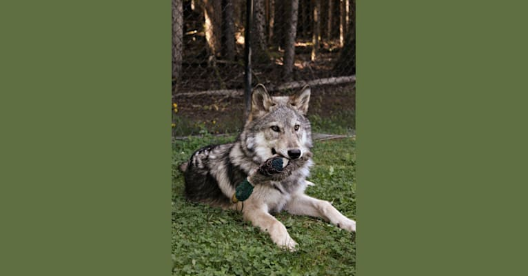 Photo of Tallen, a   in Reno, NV, USA