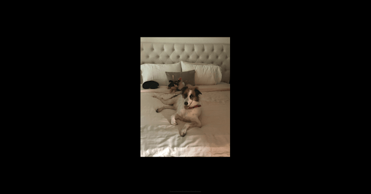 Photo of Ruby, an Arabian Village Dog  in Bahrain