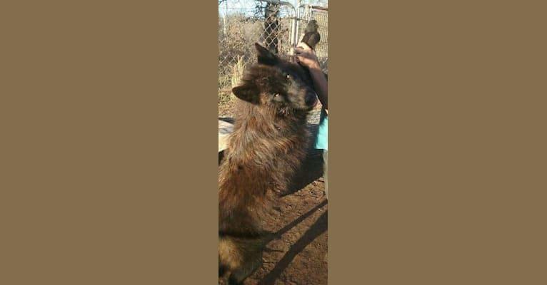 Photo of Rex, a   in North Carolina, USA