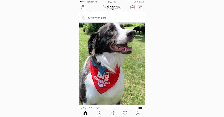 Photo of Willie, a Border Collie, Russell-type Terrier, and Pointer mix in Tennessee, USA
