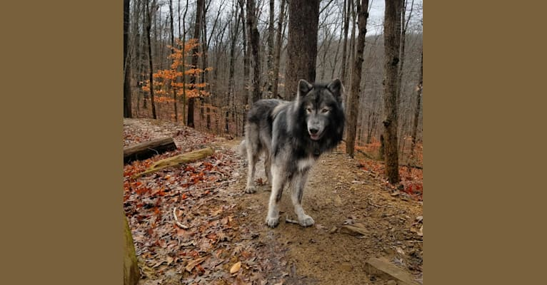 Photo of Timber, a