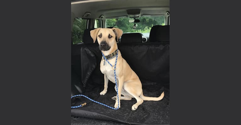 Photo of Bernard, a Mountain Cur, Rat Terrier, and Border Collie mix in Mississippi, USA