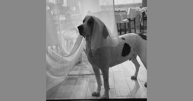Photo of Glenn, a Treeing Walker Coonhound  in South Carolina, USA