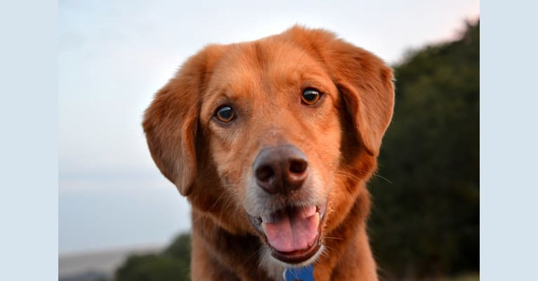 Photo of Andy, an European Village Dog  in Livadia, Greece