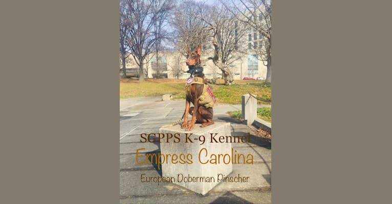 Photo of Empress, a Doberman Pinscher  in Concord, NC, USA