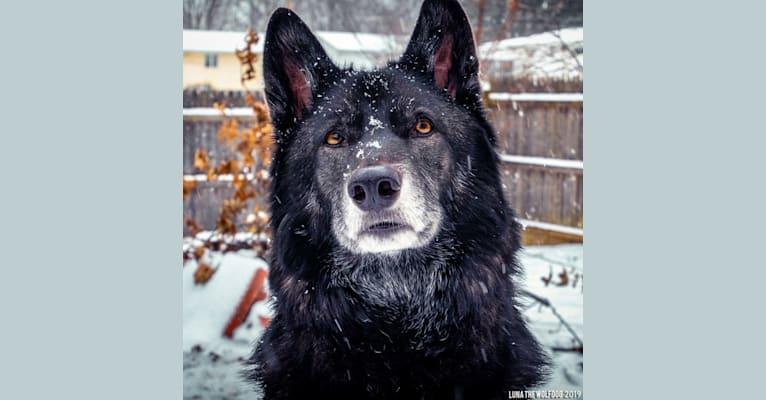 Photo of Luna, a   in Florida, USA